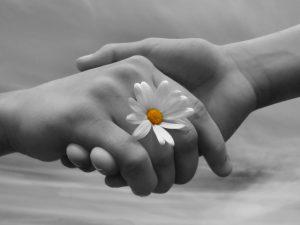 mani con fiore donazione